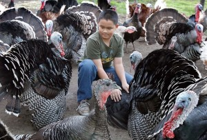 4-H student David with his Heritage Turkeys in 2009