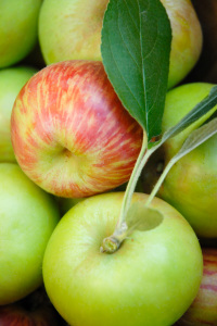 apples-600