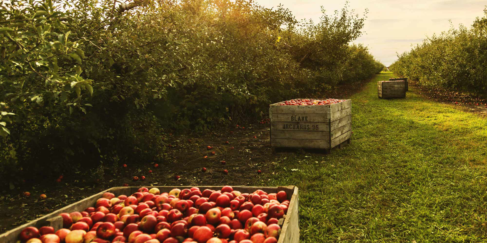 Origin Stories and New Horizons: Apple Farmers and Cider Makers Dinner by Slow Food Russian River