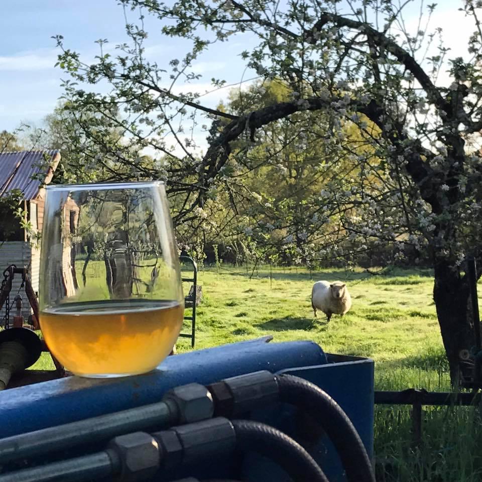 Cider Revival in Sonoma County